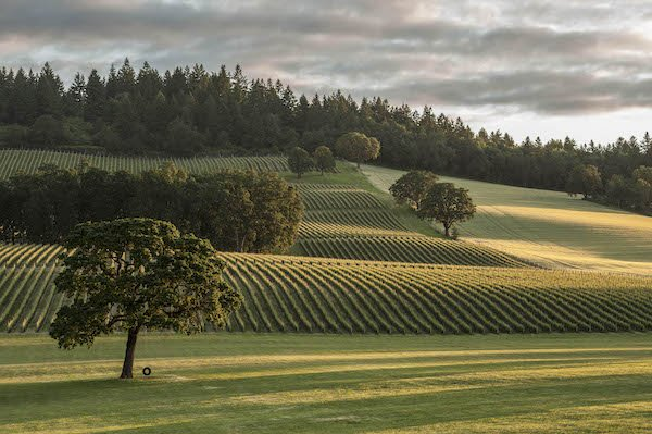 Stollar Winery in the Chehalem Valley with rows of trees at sunset