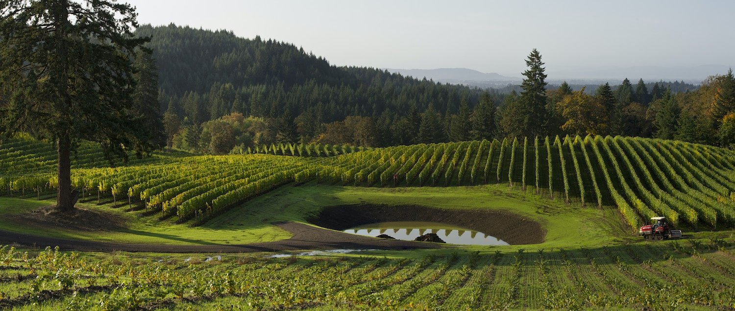 Alexana Wine Vineyard in Chehalem Valley AVAs