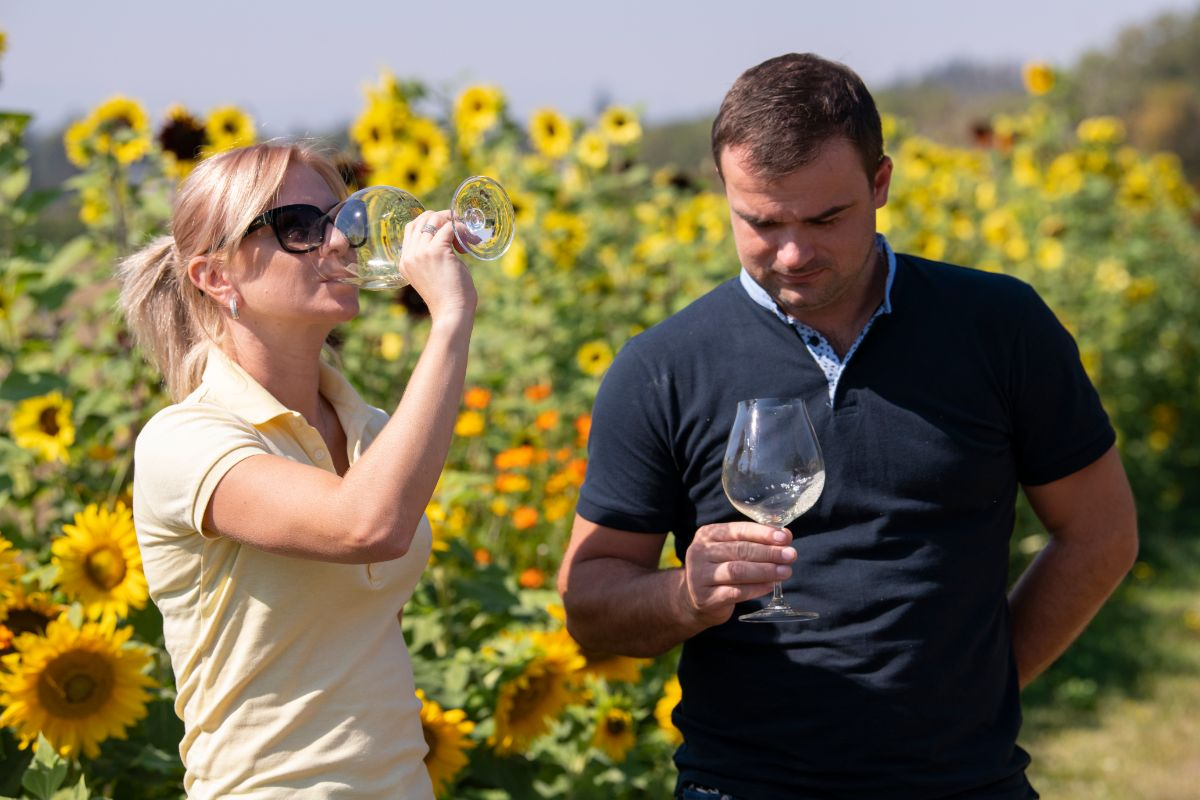 Couple wine tasting near sunflowers on a sunny day