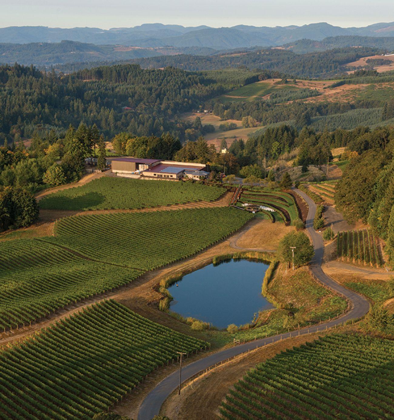 Aerial shot of Elk Cover vineyards near Yamhill-Carlton