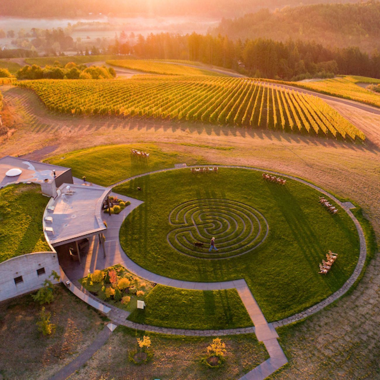 Aerial shot of Fairsing Vineyards near Yamhill-Carlton